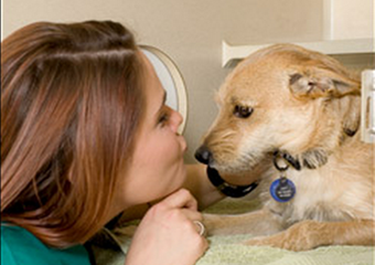 crescent city veterinarian pet friendly new orleans